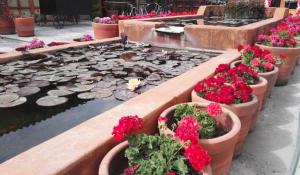 Flores y peces en el agua